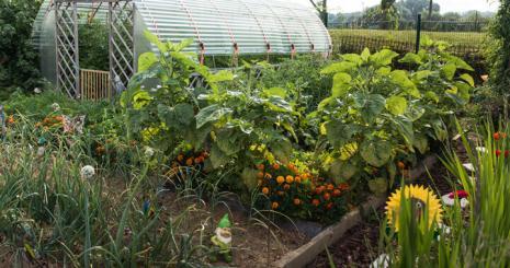 zero-pesticide-jardin-herouville