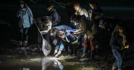 sortie-nocturne-mares-lebisey-herouville-enfants